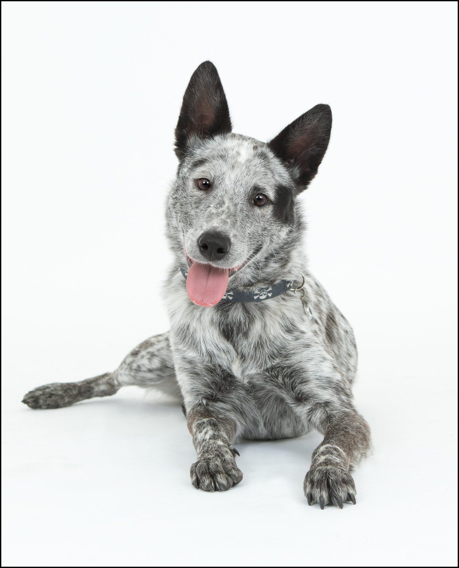 Gorgeous studio pet photography