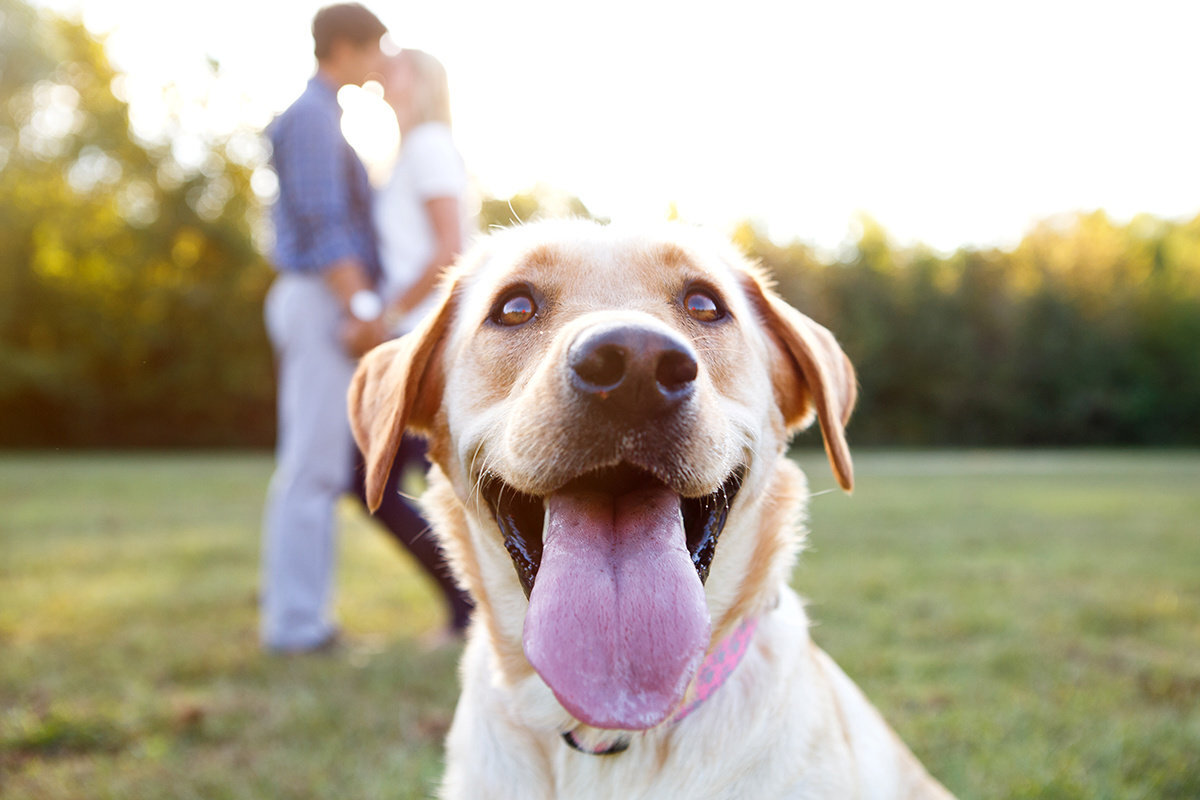 Engagement-Session-With-Dog-01