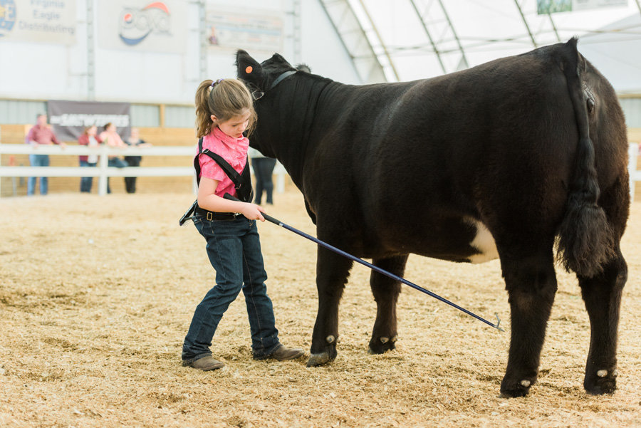 Livestock-Photographer-Stock-Show-PHotos-by-Carrie-B-Joines (1)
