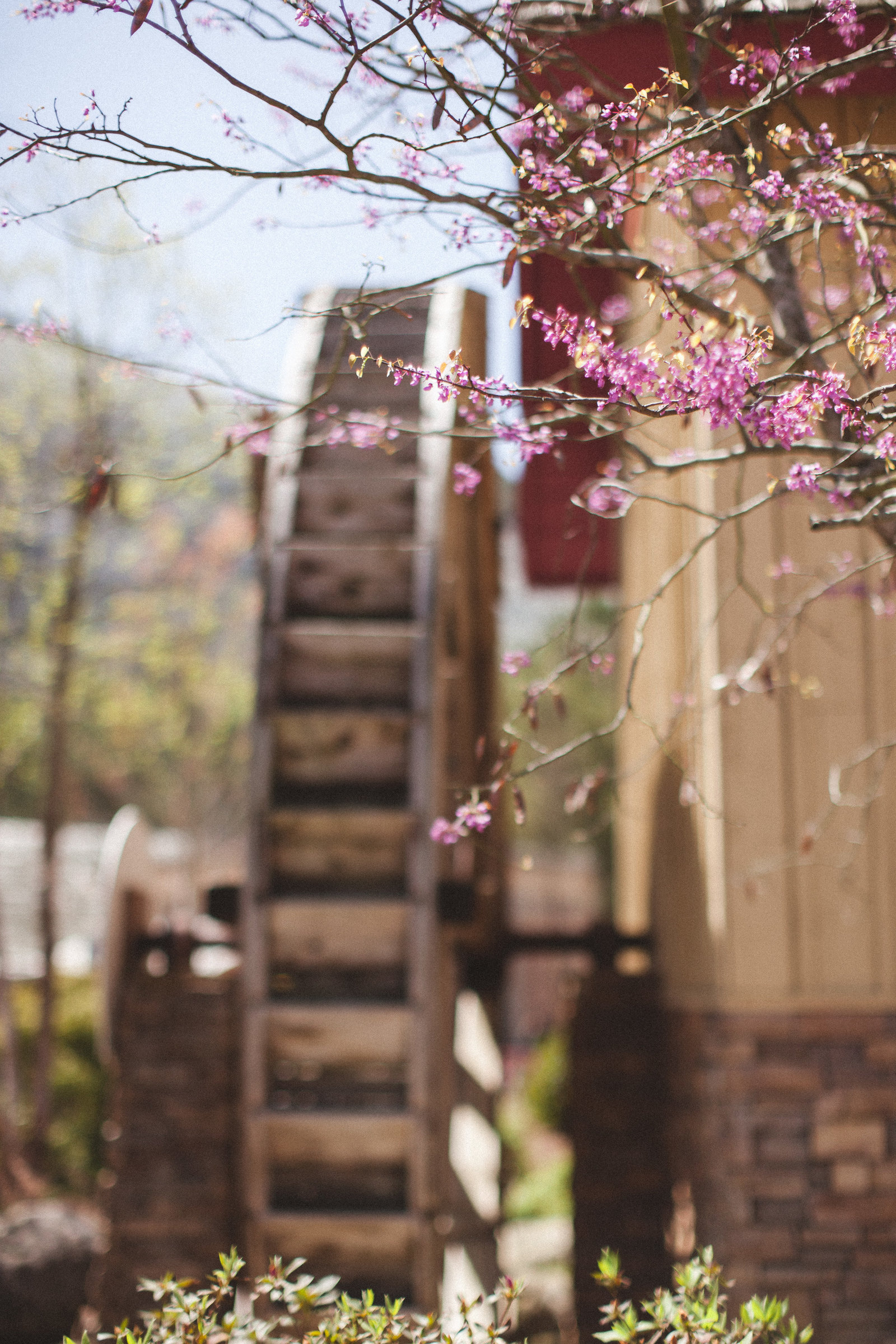Stone Mountain Georgia - DiBlasio Photo-9210