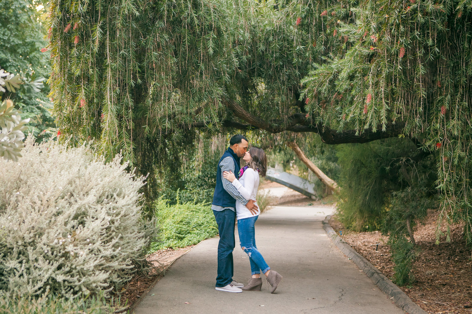 UC Davis Arboretum engagement couple under tree