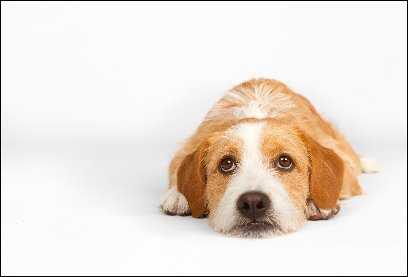 San Diego's best studio dog photography