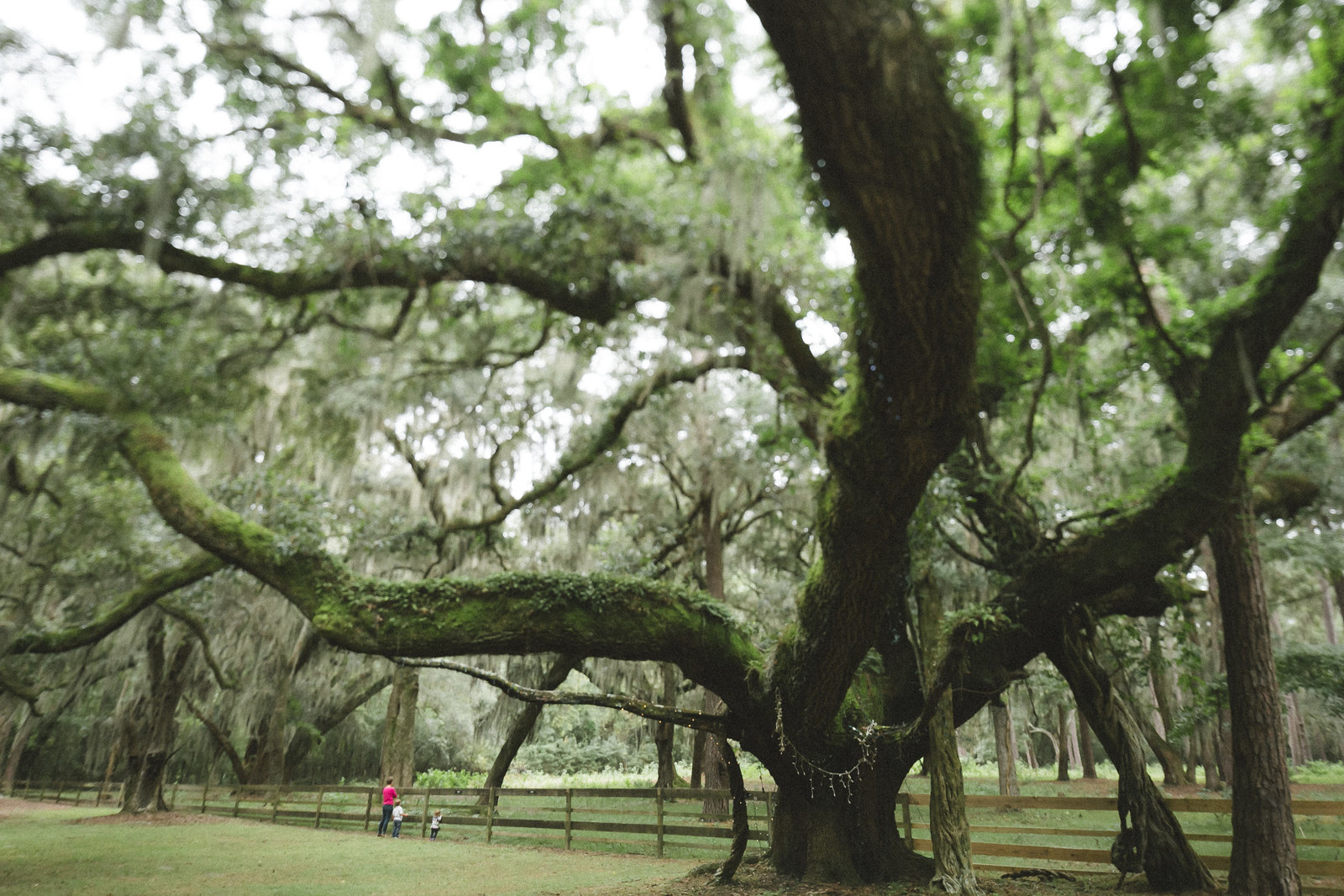 Savannah Georgia - DiBlasio Photo-0138