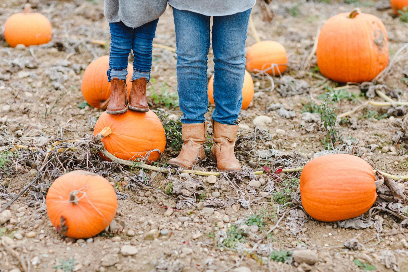 pumpkin-chiara (1 von 1)