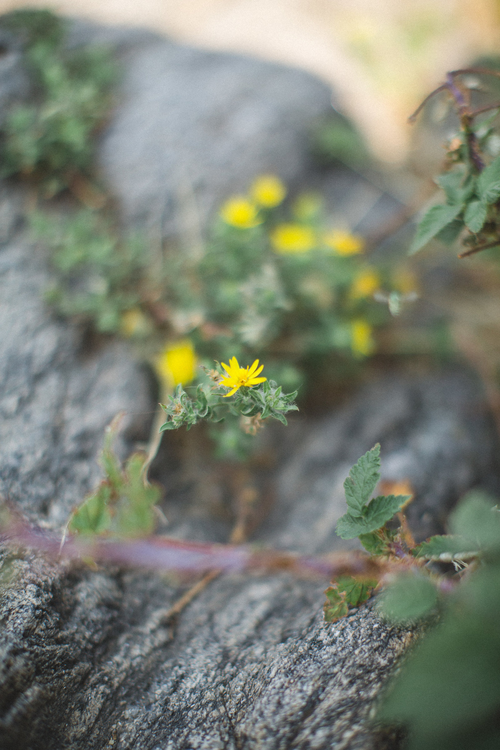 Boulder Colorado -DiBlasio Photo-5