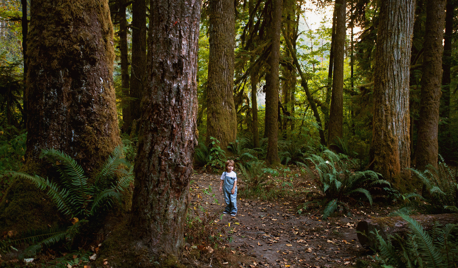 child photography in the woods in Bremerton Wa