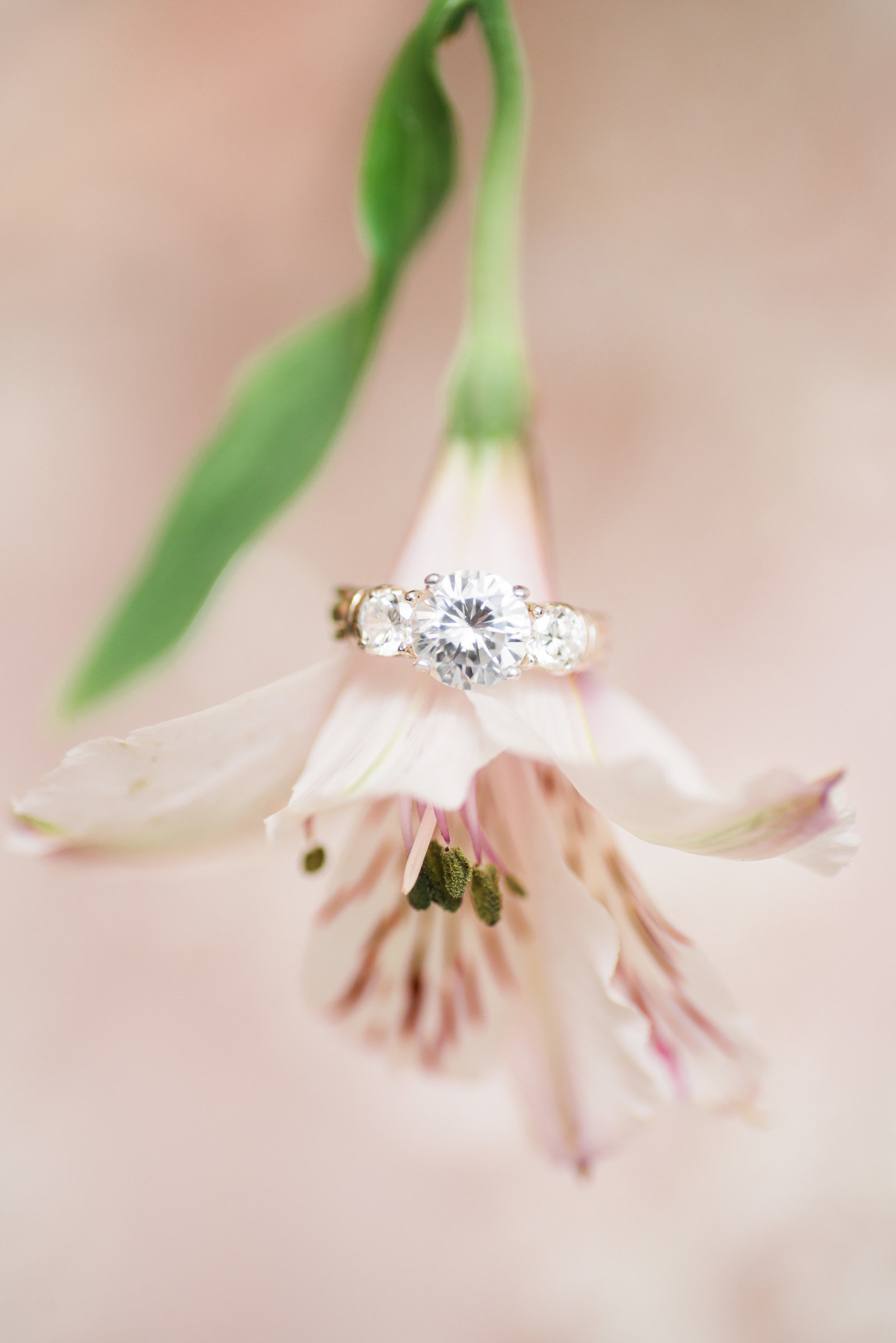 Wedding engagement ring on a pink carnation flower photo