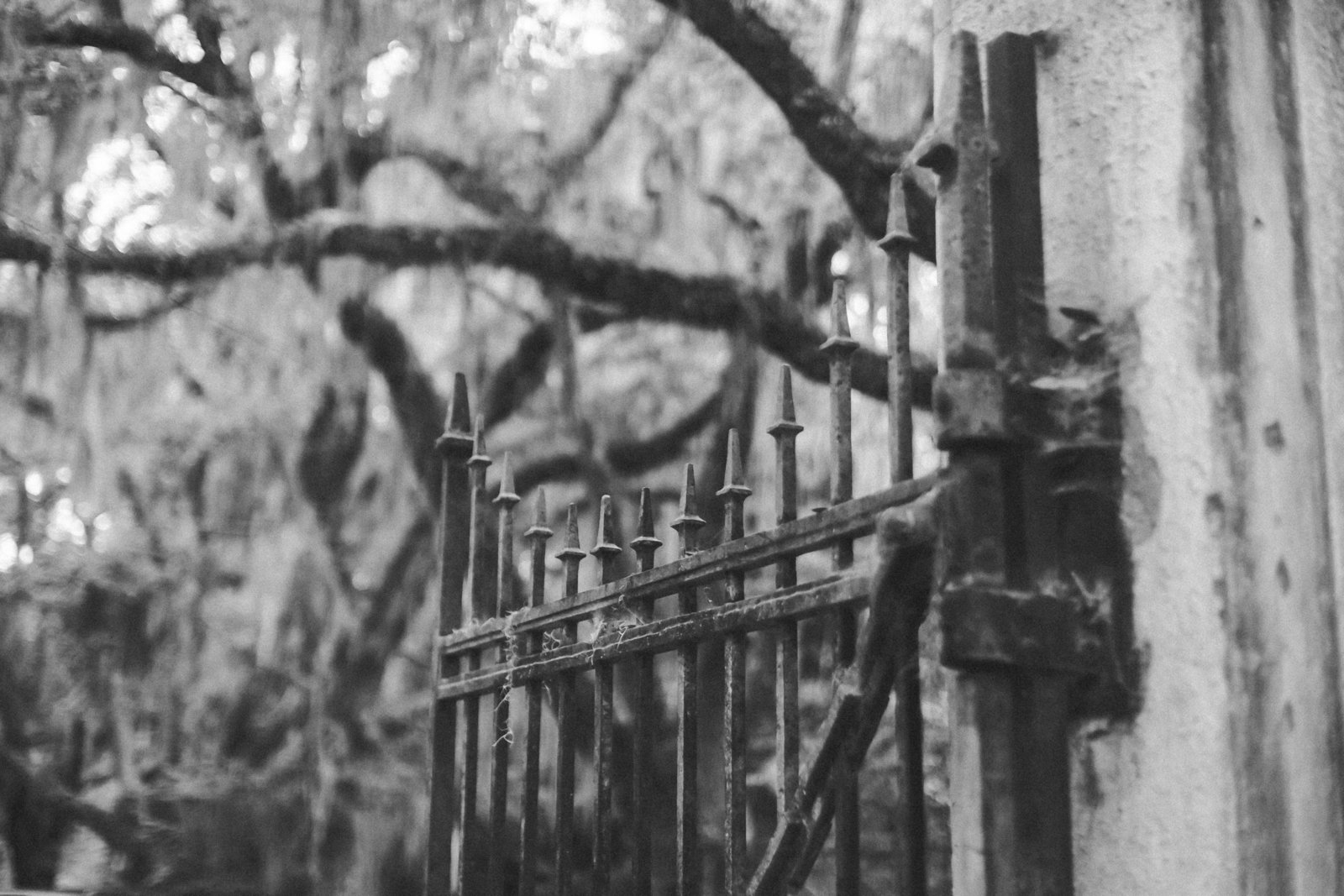 Savannah Georgia - DiBlasio Photo-0055