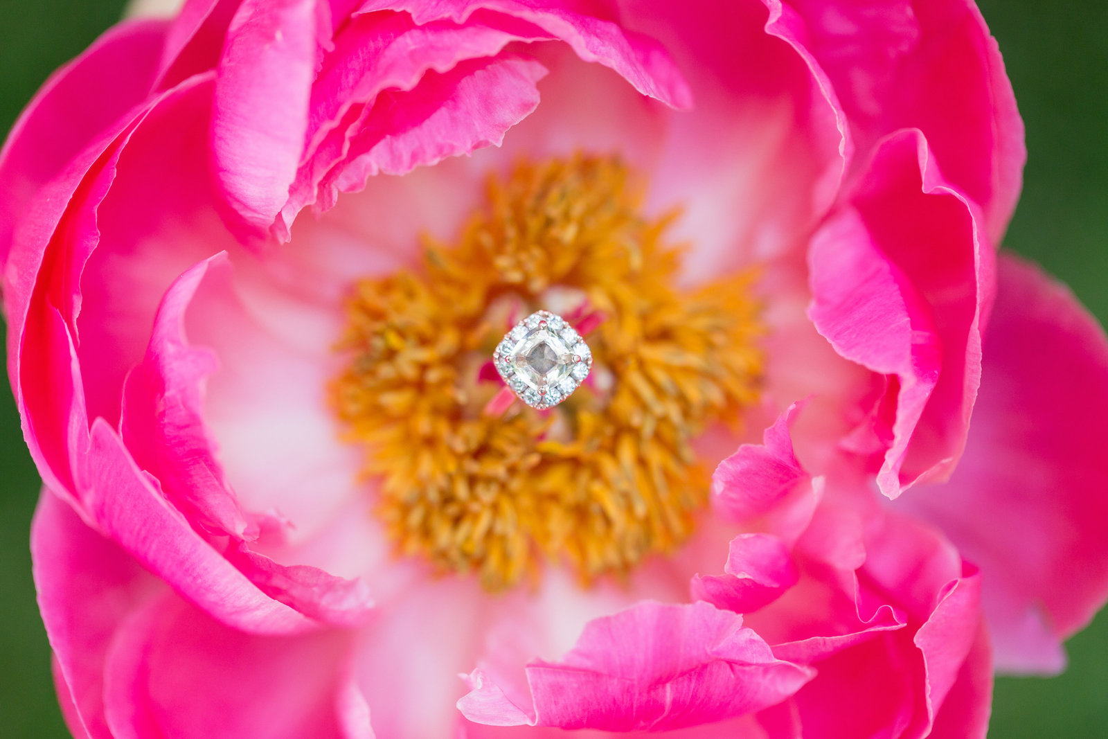 Desert Oasis Wedding  |  Round Lens PhotographyJune11