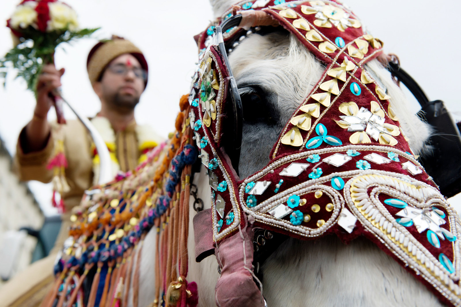 the groom rides a horse during the barat