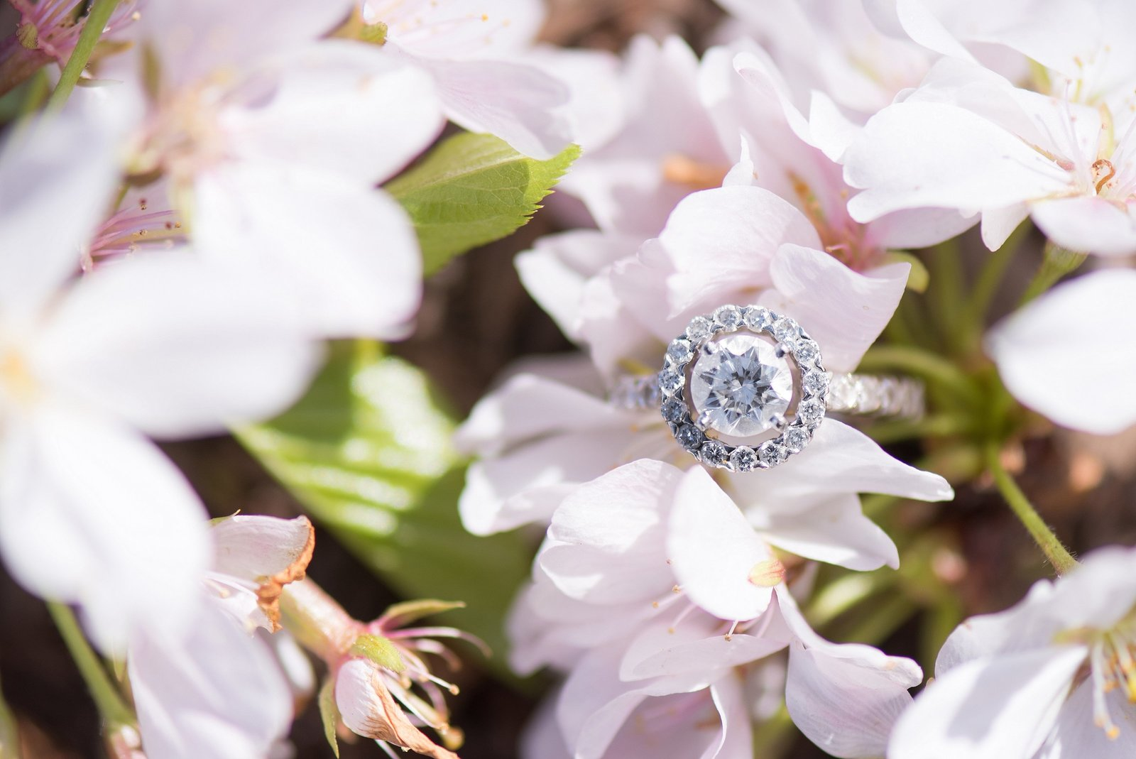 Round Cut Diamond Engagement ring on Light Pink Cherry Blossom Photo