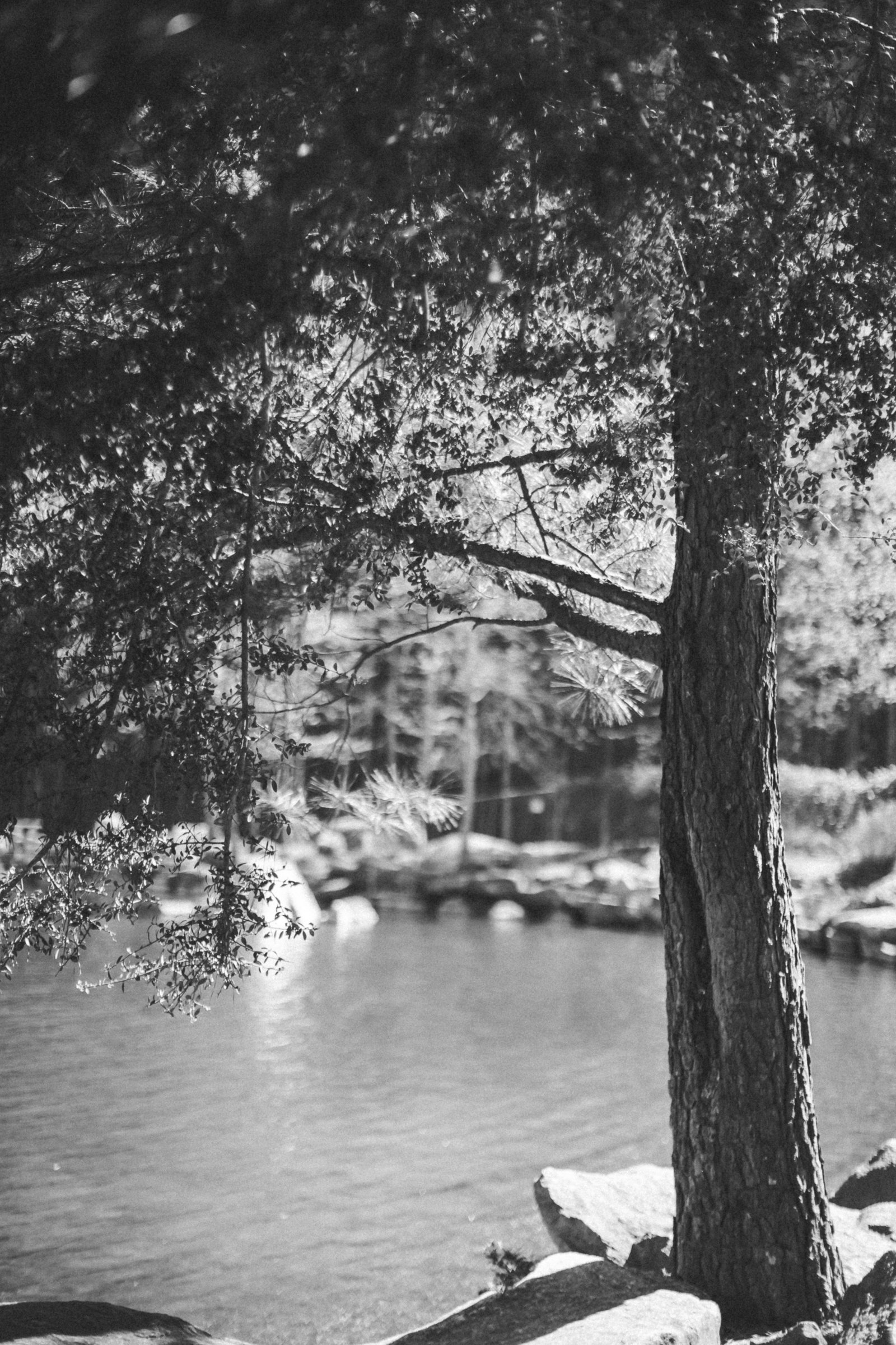 Stone Mountain Georgia - DiBlasio Photo-9270