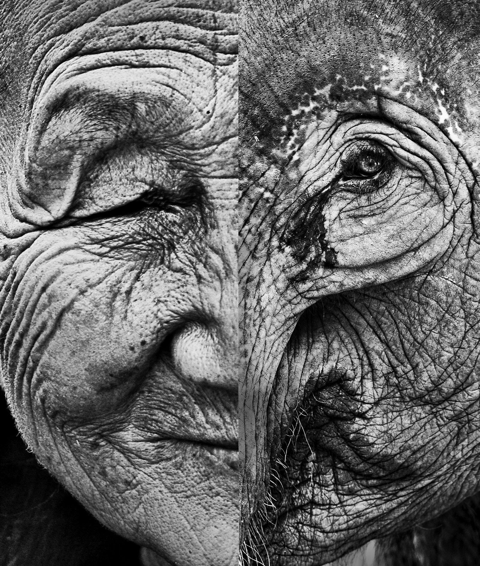 oldwomanandtheelephant2