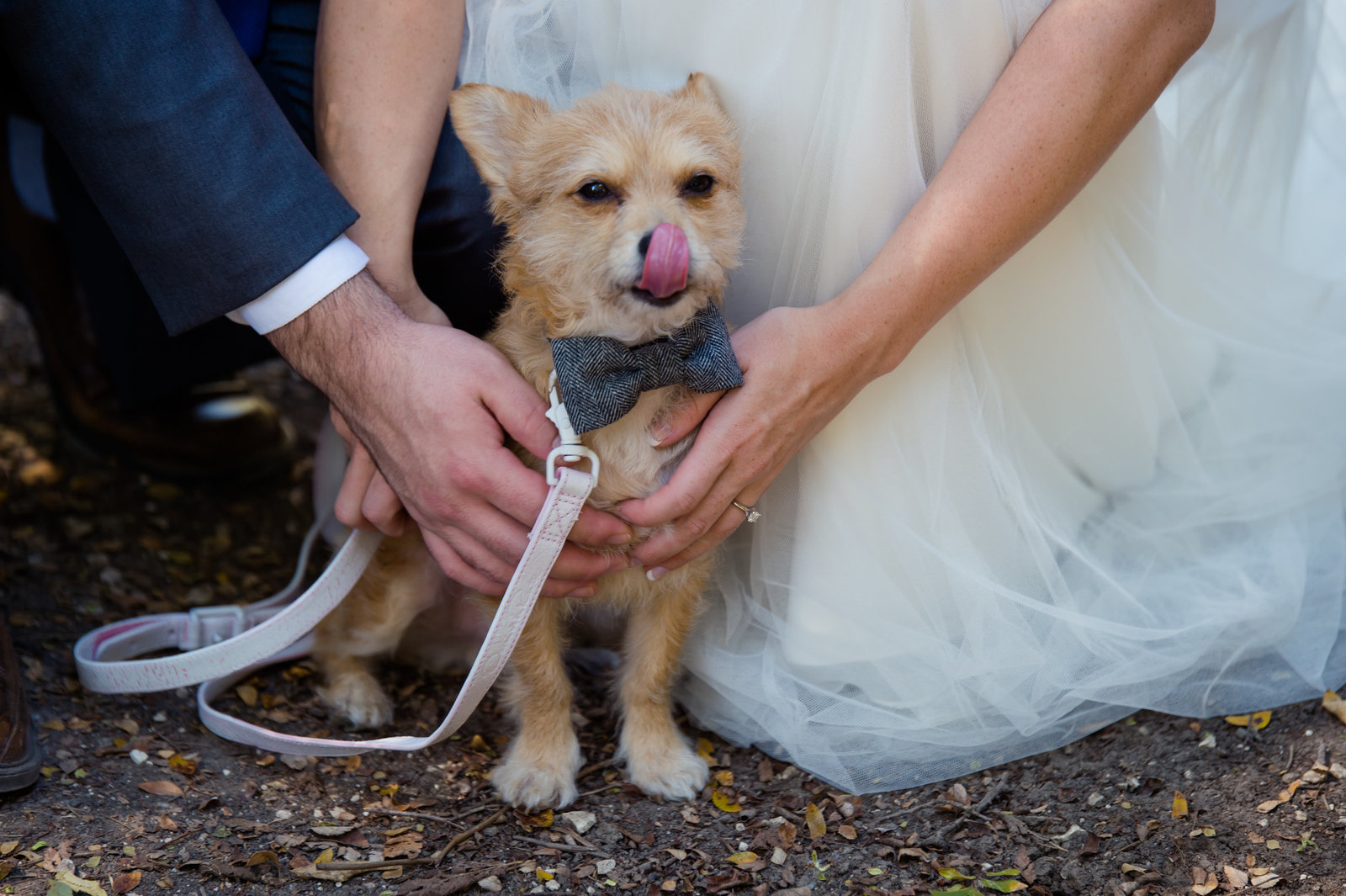 Dog as ring bearer by Brittany Barclay Photography