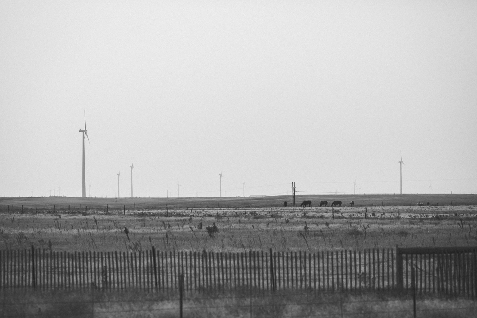 Nebraska -DiBlasio Photo-2
