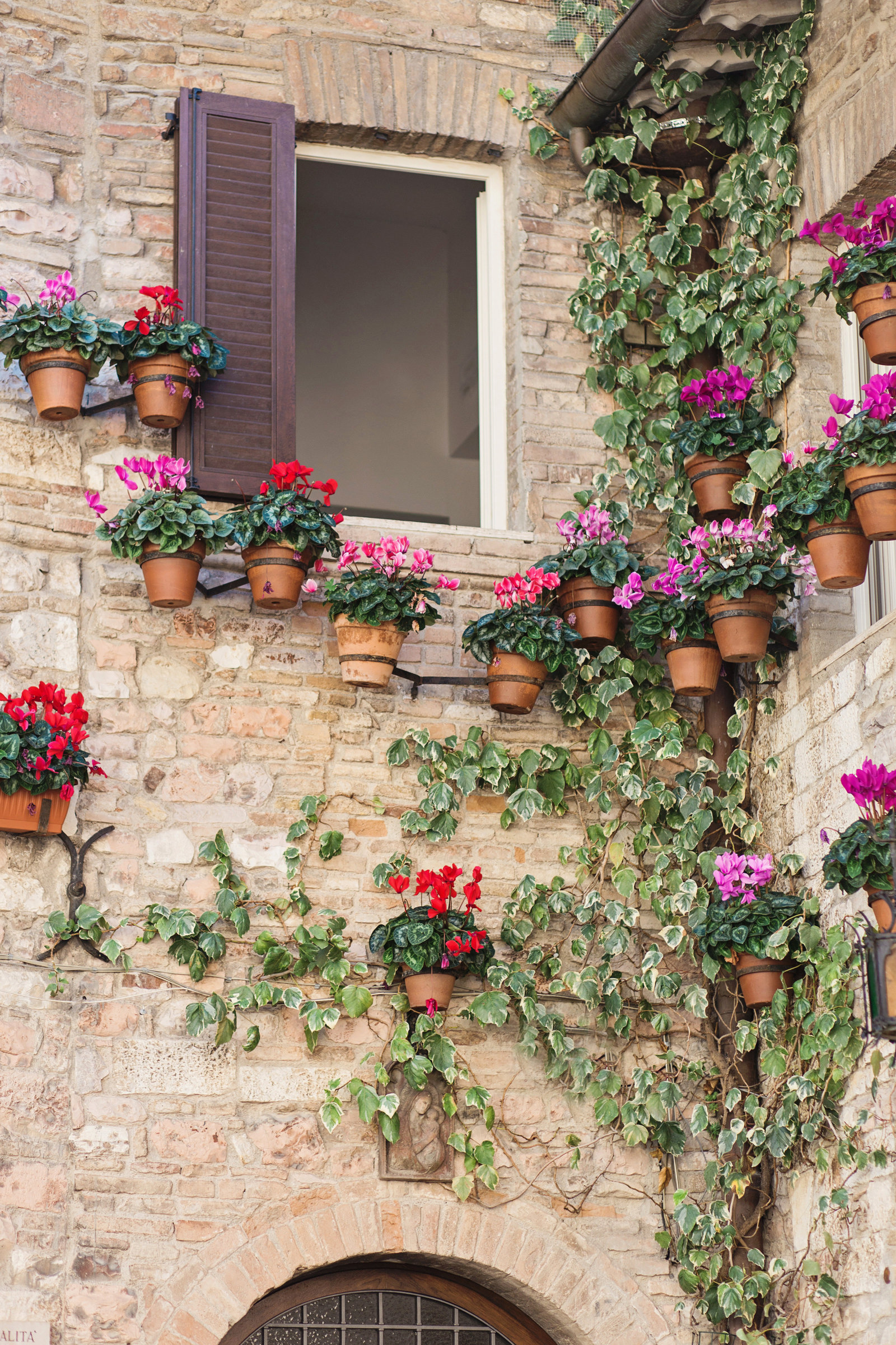 Assisi-flowers