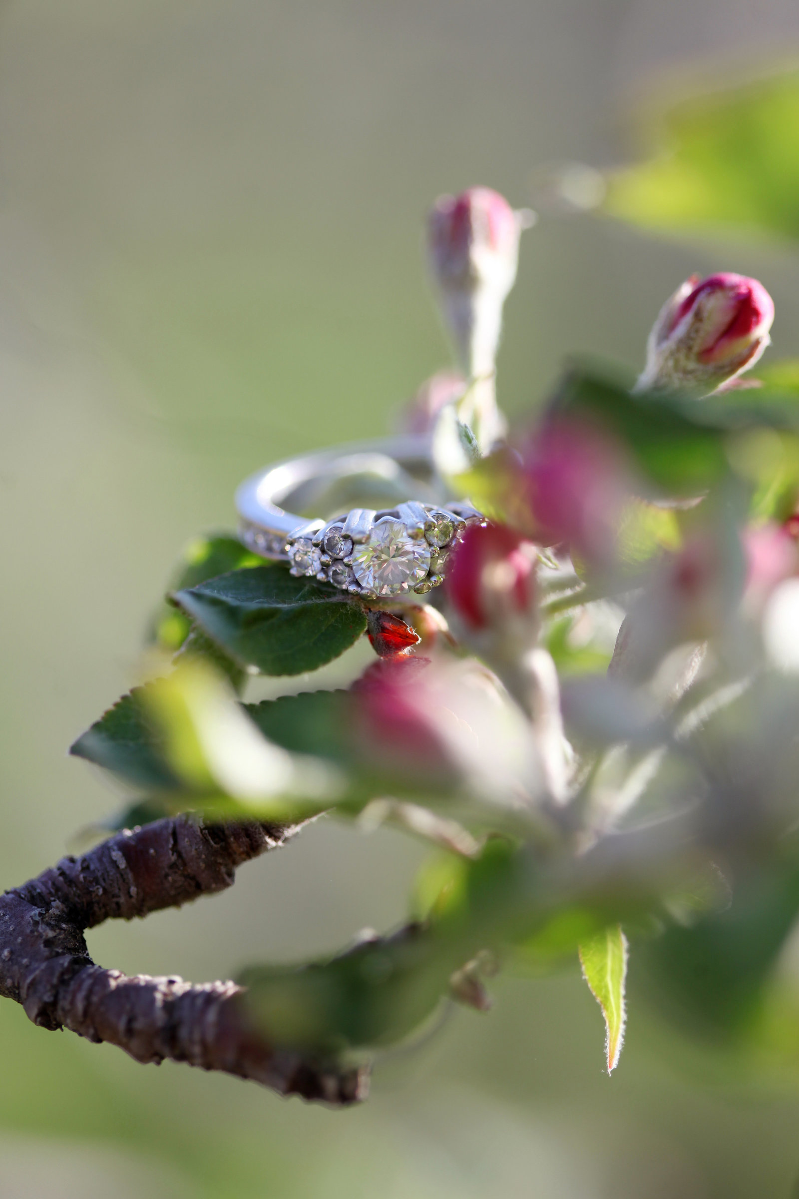 TRACEY_LYNNE_PHOTOGRAPHY_OTTAWA_WEDDINGS_RINGS