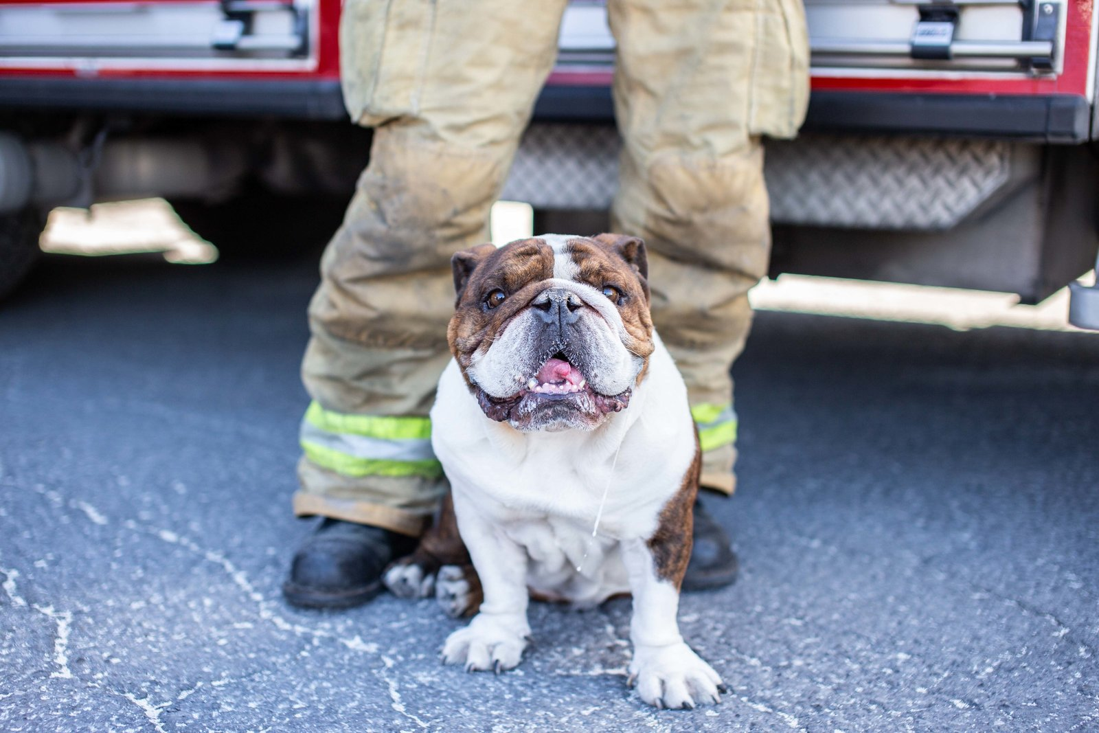 Firefighter-Animal-Hero-Brittany-Gawley-Photography-Westboro-Studio-13