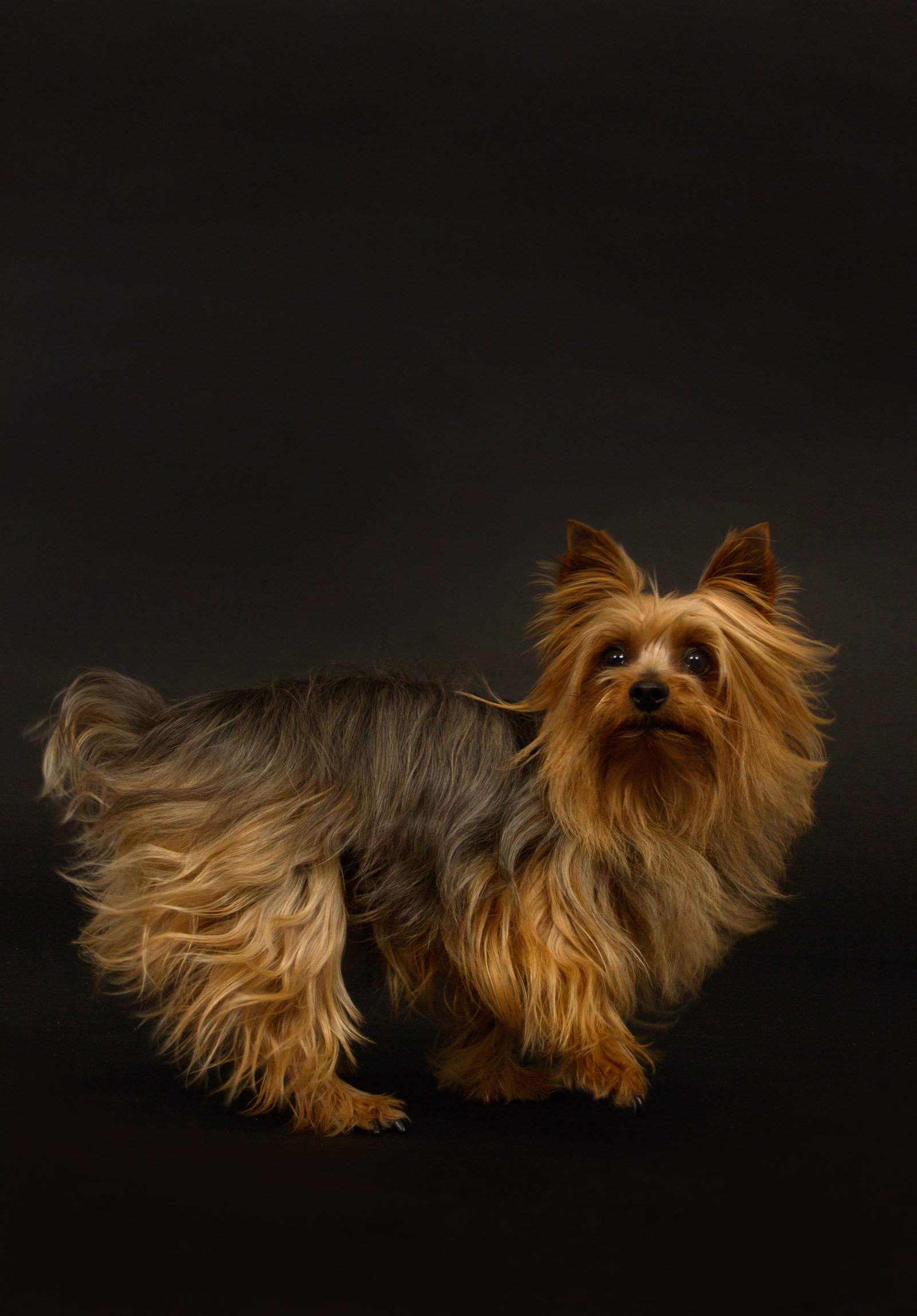 San Diego's best studio dog photographer