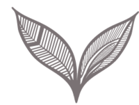 purplefern1