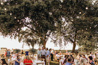 wedding guests at wedding reception sitting at tables under trees