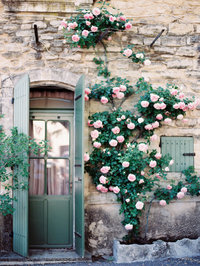 provence-france-roses