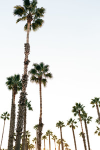 bloguettes-stockthatrocks-santabarbara-0012