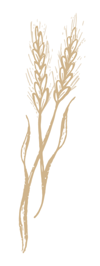 hand drawn wheat stalk
