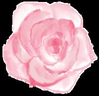 Dark_Pink_Rose