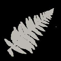 grayfern