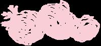 ranunculus 09