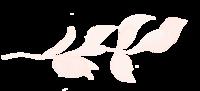 AJ_leaf