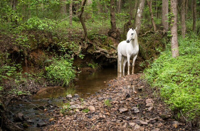 stunning-steeds-photo-gray-horse-creek