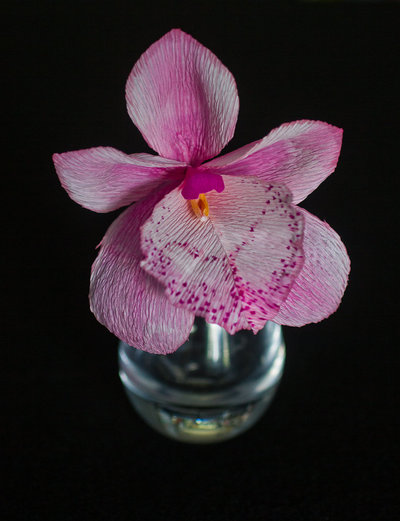 orchid12