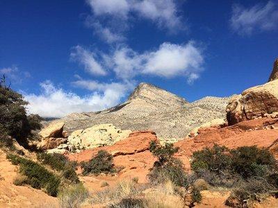 Turtleneck_Peak_from_the_Calico_Springs_trail_in_Red_Rocks_Canyon.___mollietobiasphotography__findyourpark__nationalparkgeek__nature__desert__theoutbound__natgeolandscape__redrockcanyon__wanderlust__tlpicks__bpmag__cubicle2tent__vivalasvegas__visitla