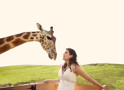 Bride looking at Giraffe at San Diego Safari Park
