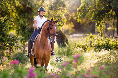 lusitano horse and rider portrait