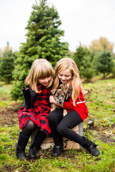 mcmurtreys tree farm christmas photos emma lee photography