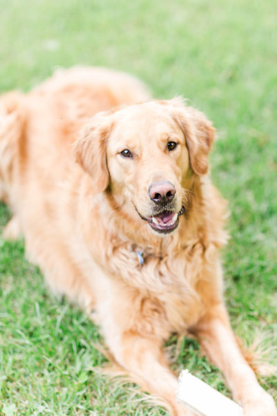 jacob the golden-12