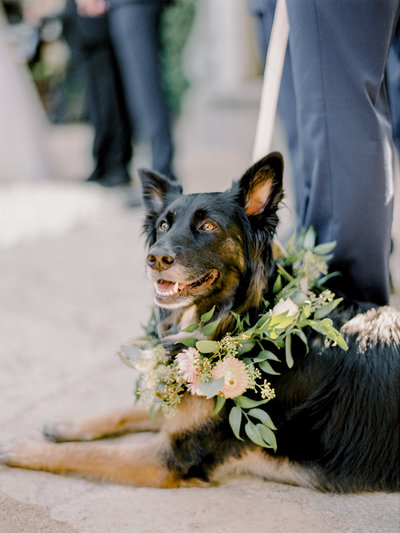 Sonoma California Wedding by Alp & Isle-44