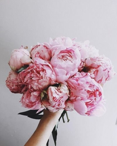 cf1cf13081788bb773a4d24121b9314c--peonies-season-cut-flowers