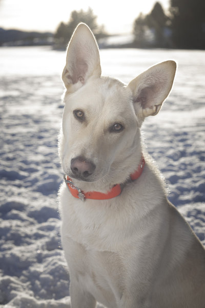 Dog_Photography_Montana_002