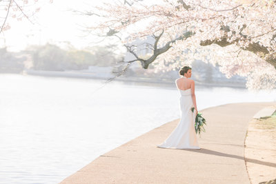 Washington DC Cherry Blossom Wedding-12