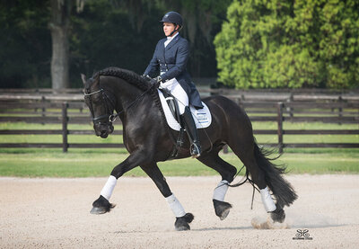 friesian dressage stallion ocala florida