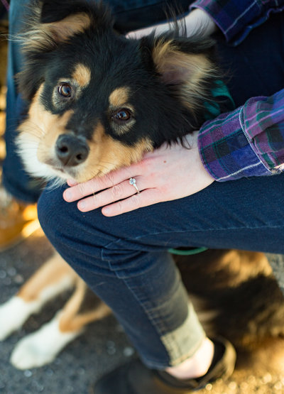 dog with engagement ring