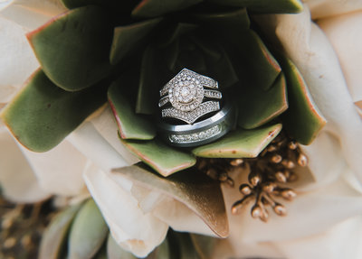 ring-flower-succulent