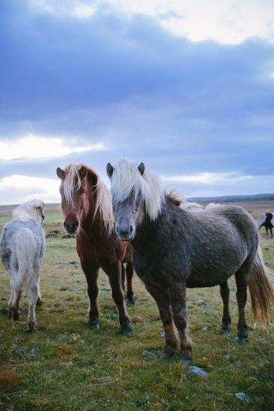 TianaSimpsonPhotography-Iceland-025