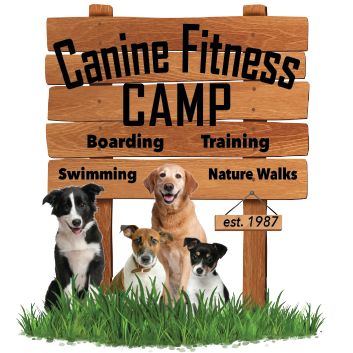 Canine Fitness Camp for Granbury, Texas