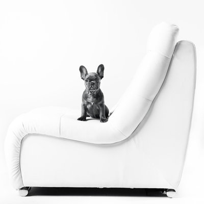 black_white_las_vegas_pet_photography_lucinda_fint_french_bulldog_puppies