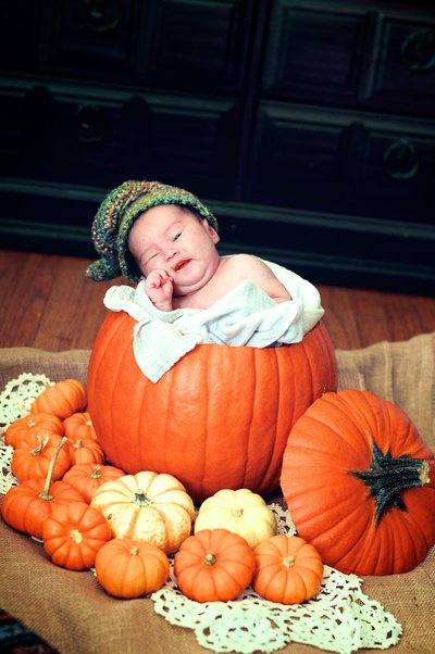 Fall Pumpkin  Newborn Portrait